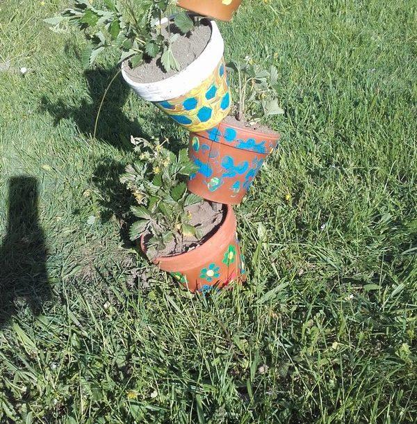 Gartenarbeit bei TM Burtscher 03