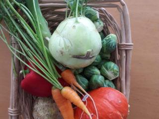 Gartengemüse ernten