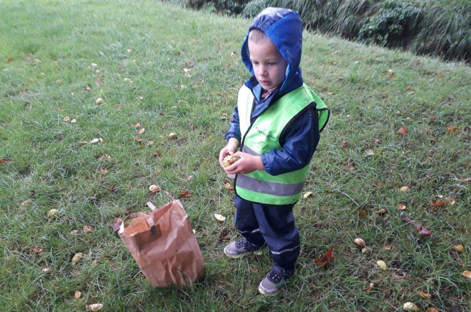 Herbstfrüchte sammeln