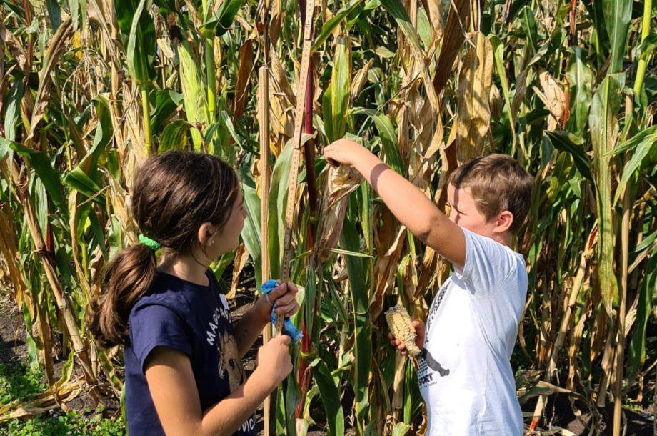 Maisprojekt in der Schule am See