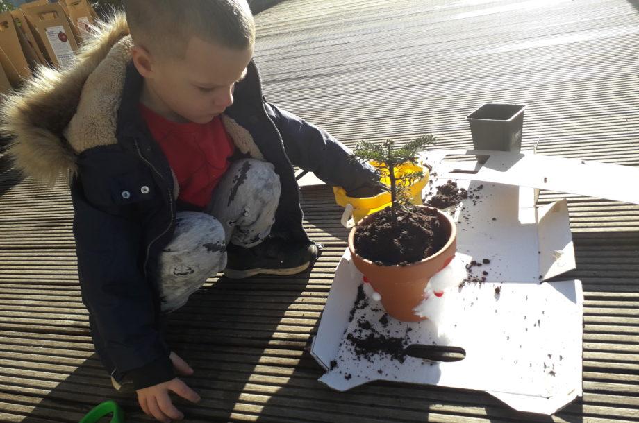 Mini-Christbäume selber einpflanzen