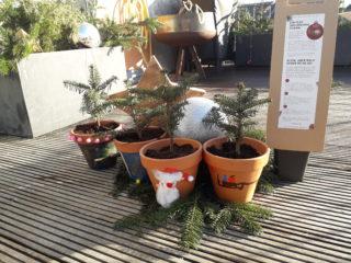 Mini-Christbaum in selbst gestalteten Töpfen