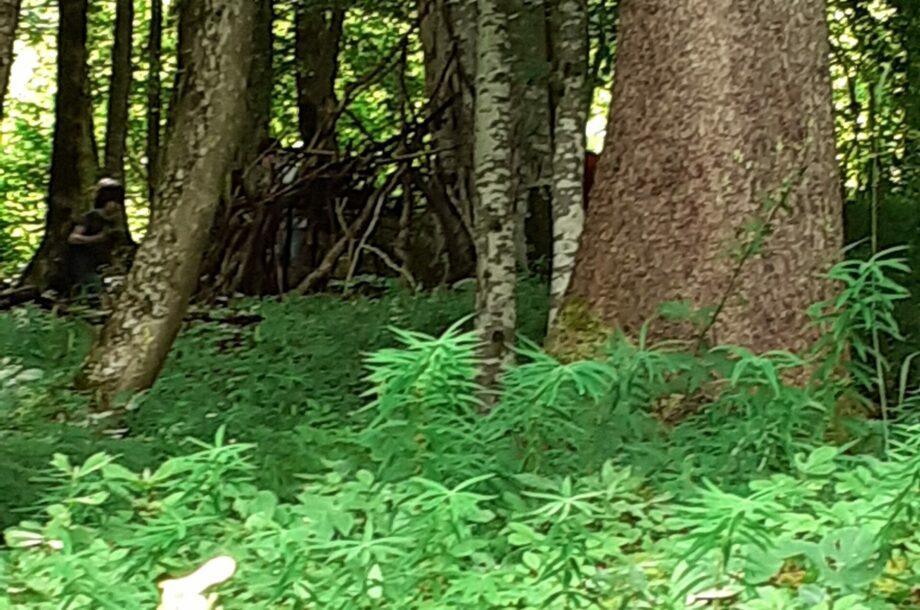 Den Wald in allen Facetten erleben